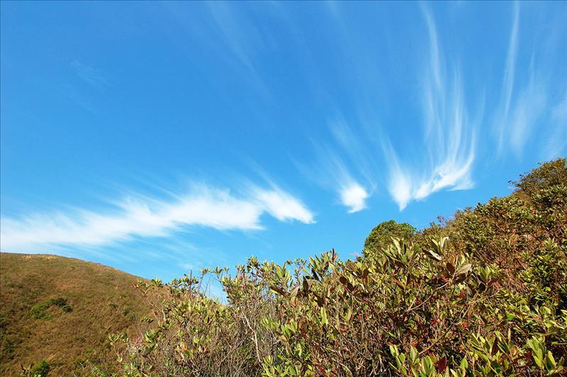 好天氣和姿態漂亮的卷雲