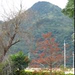 南澳原生樹木園 (20).JPG