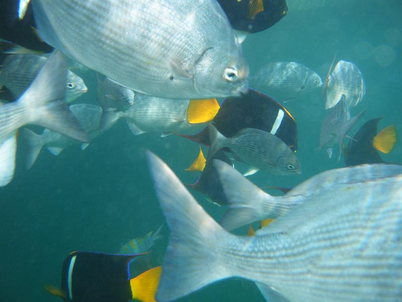 snorkling with lots of fishes