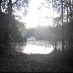 Our Noosa bush camp