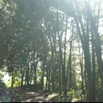 嵐亭往森林浴步道 (32).JPG