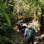 The Jungle Trek
