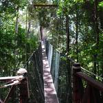 Canopy walkway, a 400 meter man-made bridge, suspended 25 to 40 meters above the ground, apparently it is the longest canopy walk of its kind anywhere.