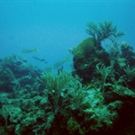 under water 4