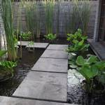 Our courtyard with koi pond