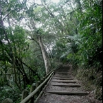 棲蘭國家森林遊樂區