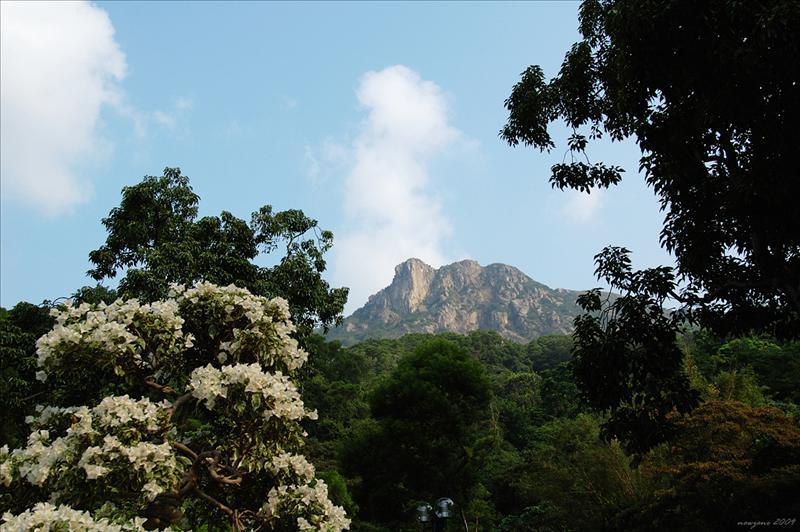 巍峨的獅子山the monumental Lion Rock