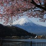 富士山加上櫻花是春天的標記