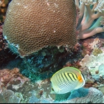 Palau_Dive_18_Peleliu_Orange_Beach_Coral_Garden_M0012858_edited_1.jpg