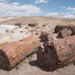 Petrified Forest 184.jpg