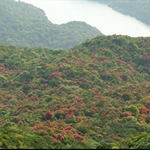 20120325 紫羅大潭 Violet Hill & Tai Tam Reservoir