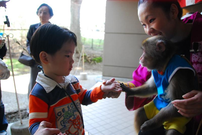 散場後可以和小猴子握手