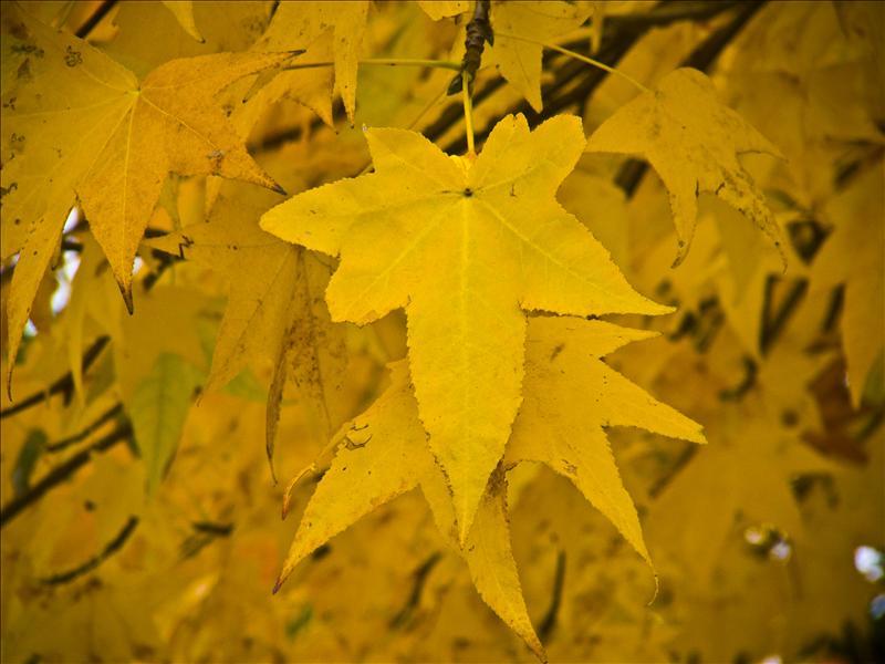 Autumn leaves...