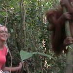 13. Sumatra - Orang-utan.JPG