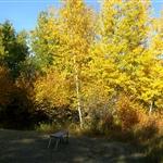 Lake, Fall 2008_ (4).jpg