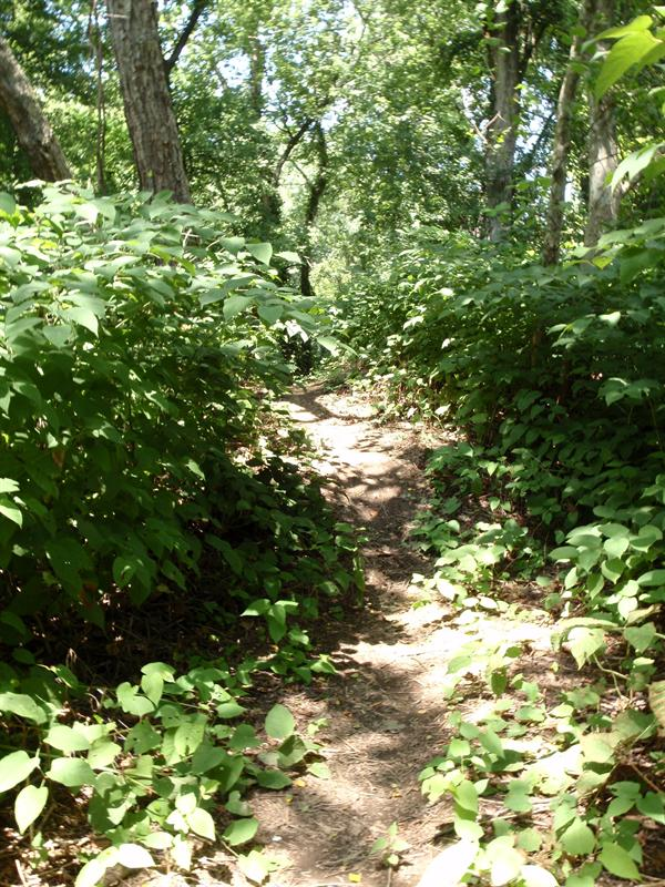 Trail on Island 93