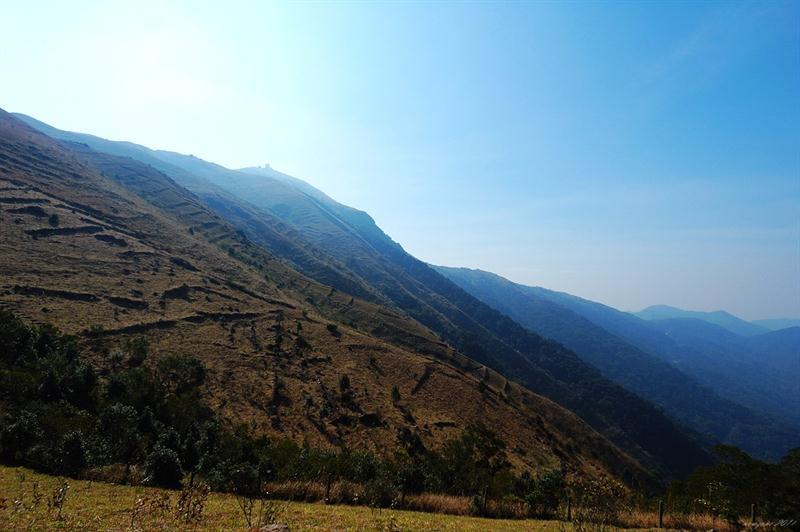 大帽山遍山都是石圍茶圃的遺跡