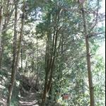嵐亭往森林浴步道 (14).JPG