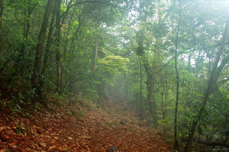 霧鎖綠蔭林徑