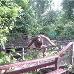 Borneo 2002