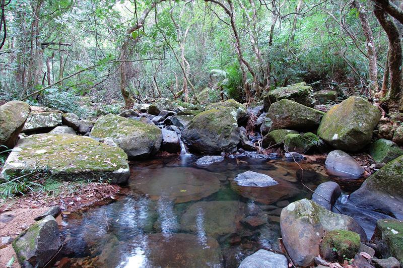 藍色林徑旁的天然河溪