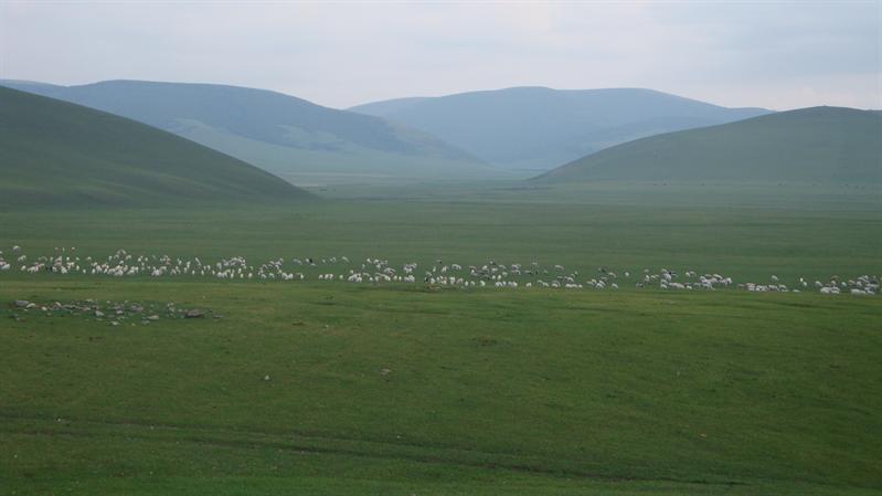 hometown meadow
