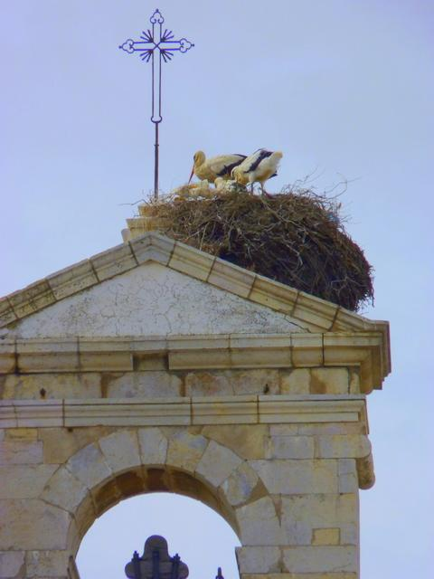 storks with their chicks