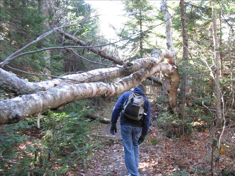 boompje op het pad