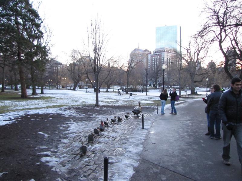Boston Public Garden - Make Way for Ducklings by Nancy Schön
