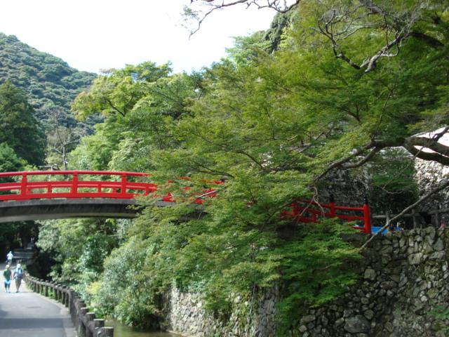 tree and red bridge