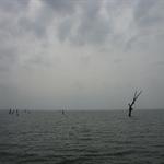 Lake Volta - geflutette Baeume