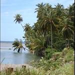landscape-coconutCove.jpg
