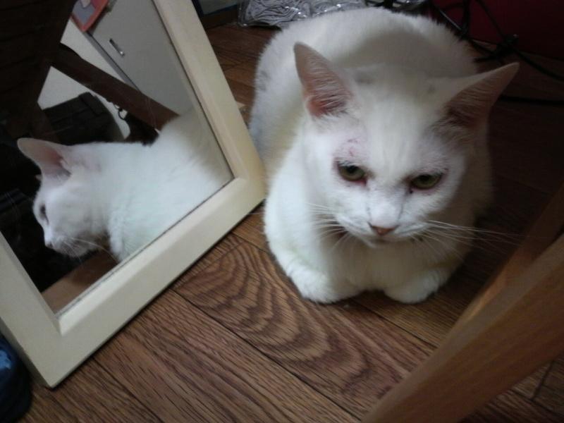 dislikes mirrors