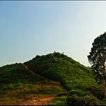 DSC_6897 髻山上的白楊樹.jpg