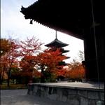 生日京都楓紅之旅2009—東寺