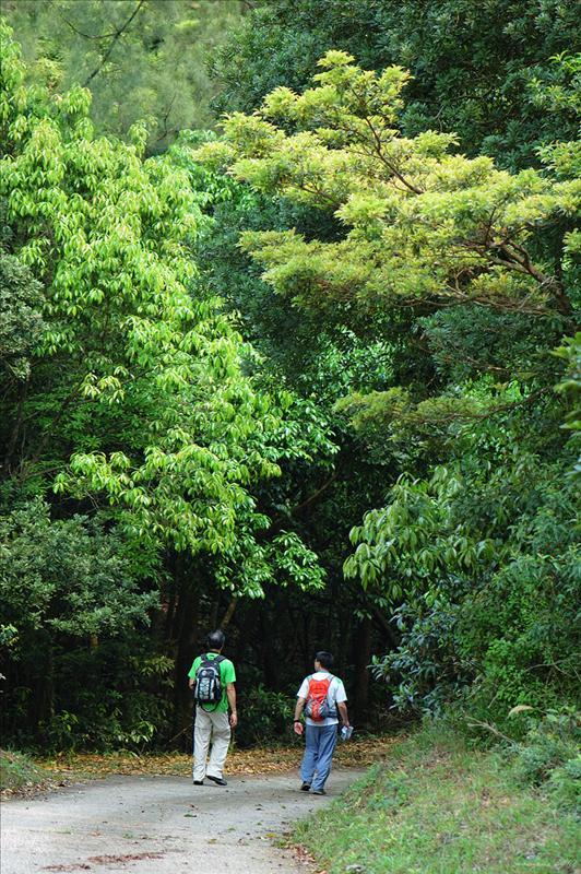 大埔滘林道乾坑段 Tai Po Kau Forrest Track Kon Hang Section