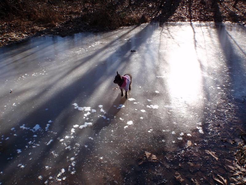 Ice Road Dog