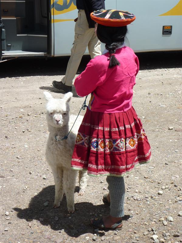Love the llamas...