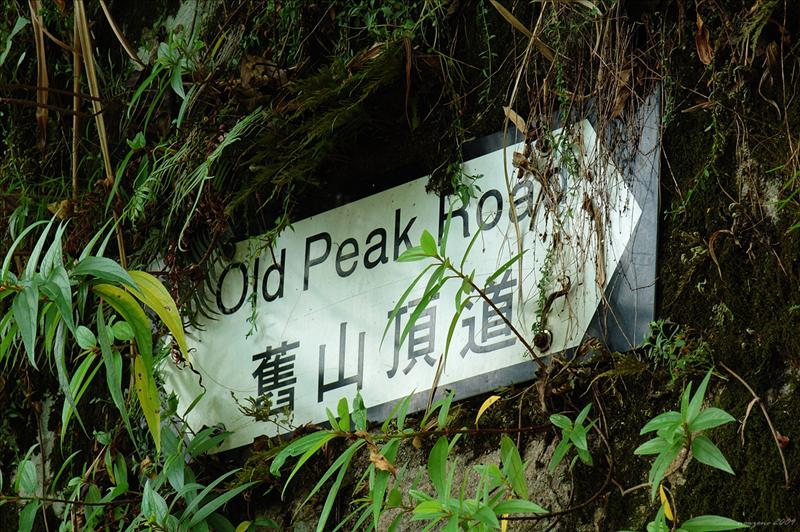 Old Peak Road 舊山頂道