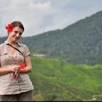 widok na plantacje herbaty