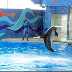 海洋公园海洋剧场海豚表演2.jpg