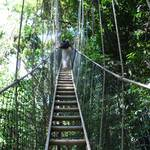 The ascent is managed by walking up a normal ladder resting on the canopy netting...very reassuring...