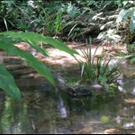 DSCN8602 溪流生態.jpg