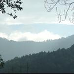 棲蘭森林步道 (24).JPG