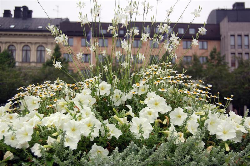 Stockholm flowers