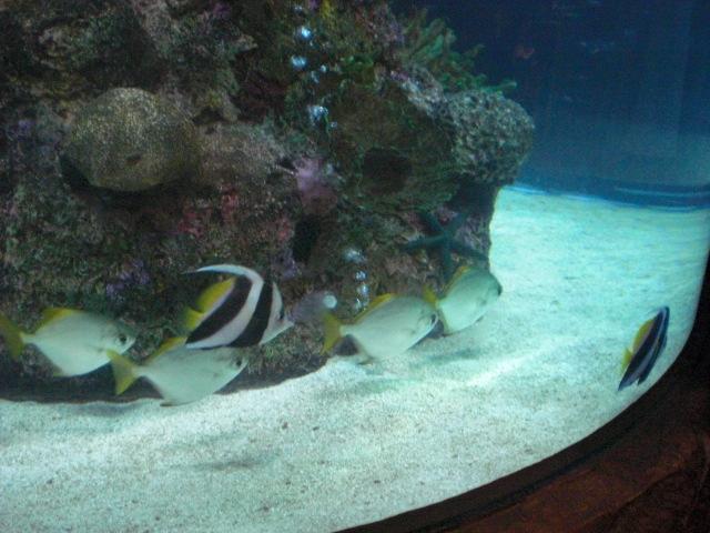Aquarium @ Rainforest Cafe in MGM Grand