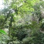棲蘭森林步道 (16).JPG