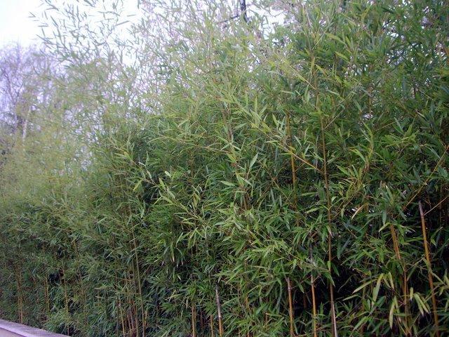 沒想到可以在法國看到竹子