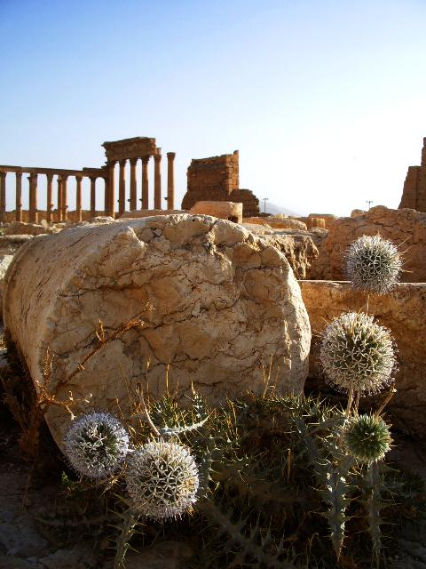 Palmira (Syria)