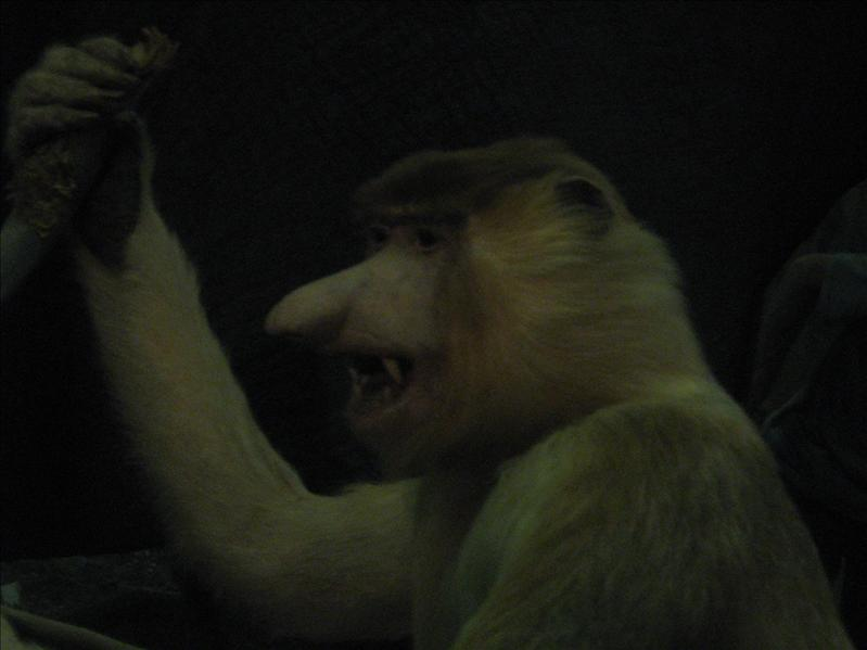Scary Stuffed Monkey in Museum